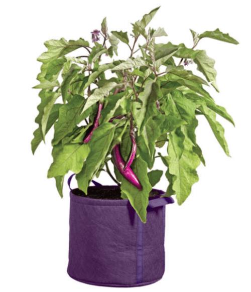 Gardener's Best Universal Grow Bag
