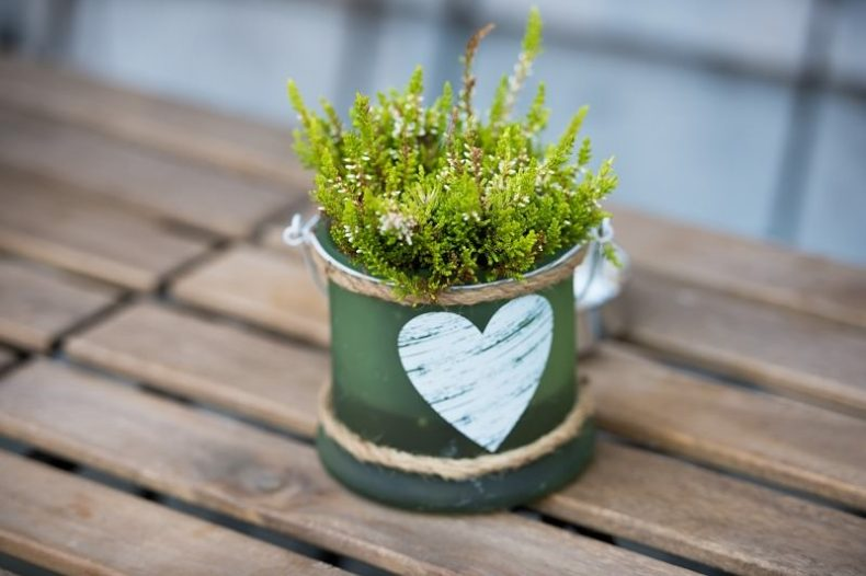 A potted plant is an eco-friendly Valentine's Day gift