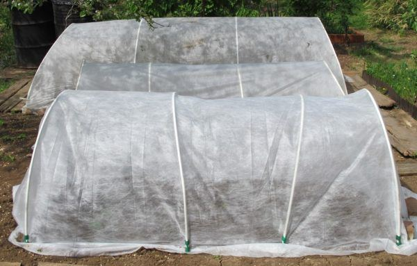 hoop houses to protect growing vegetables from cold weather