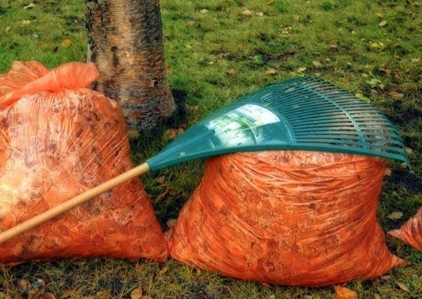 two orange bags of leaves with rake resting on top
