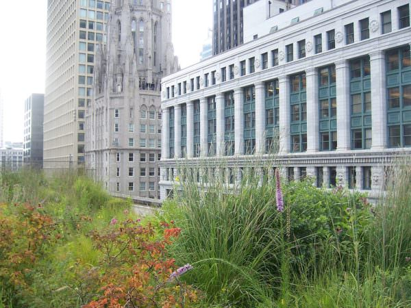 green roof on Chicago City Hall