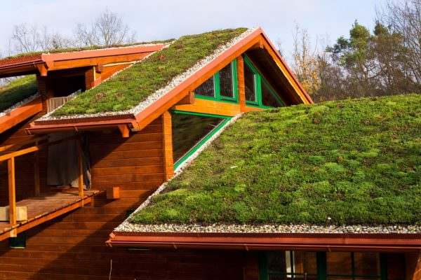 living roof on a wooden house