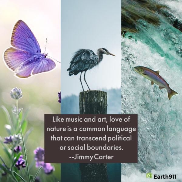 Love of nature quote from Jimmy Carter
