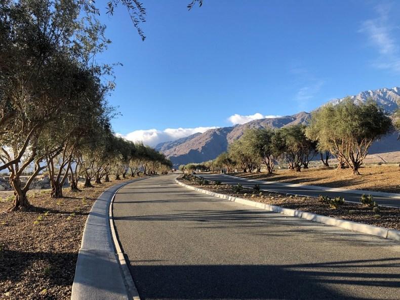 Mature olive trees at Miralon agrihood