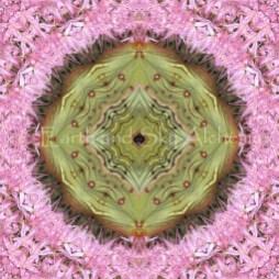 Jubilee Mandala