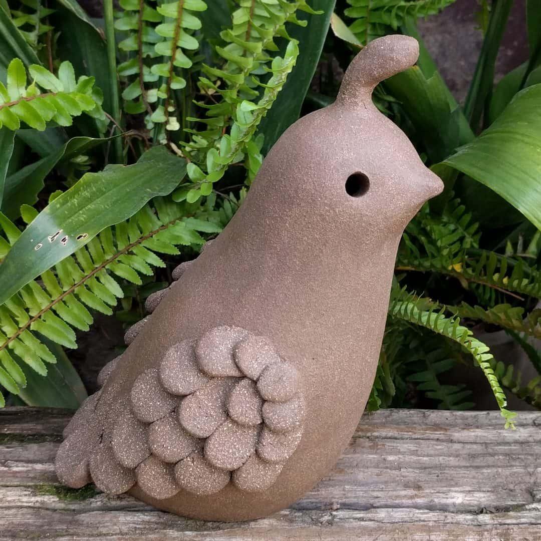 smaller_male_quail_outside_12
