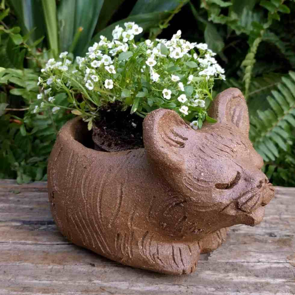 cat_curled_planter_flowers_greenspace_14