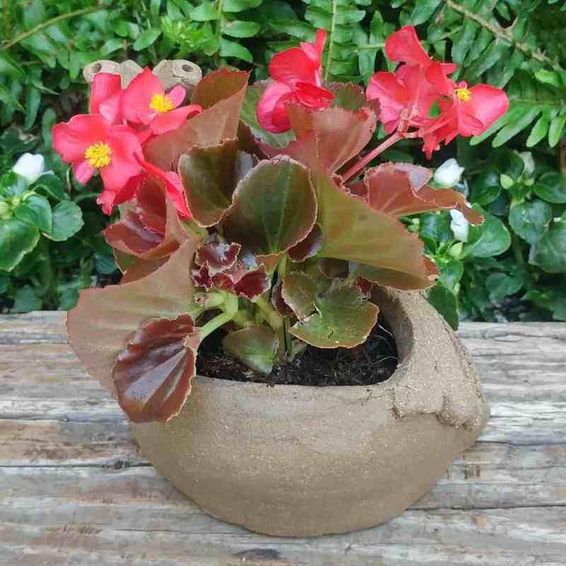 snail-planter-8