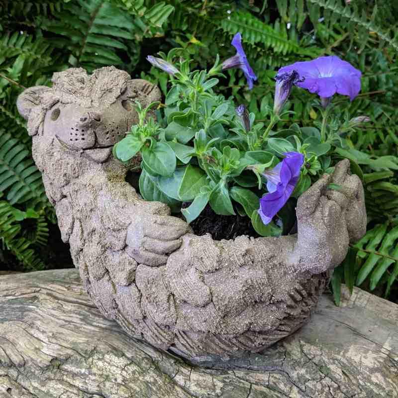 hedgehog-planter-on-back-6