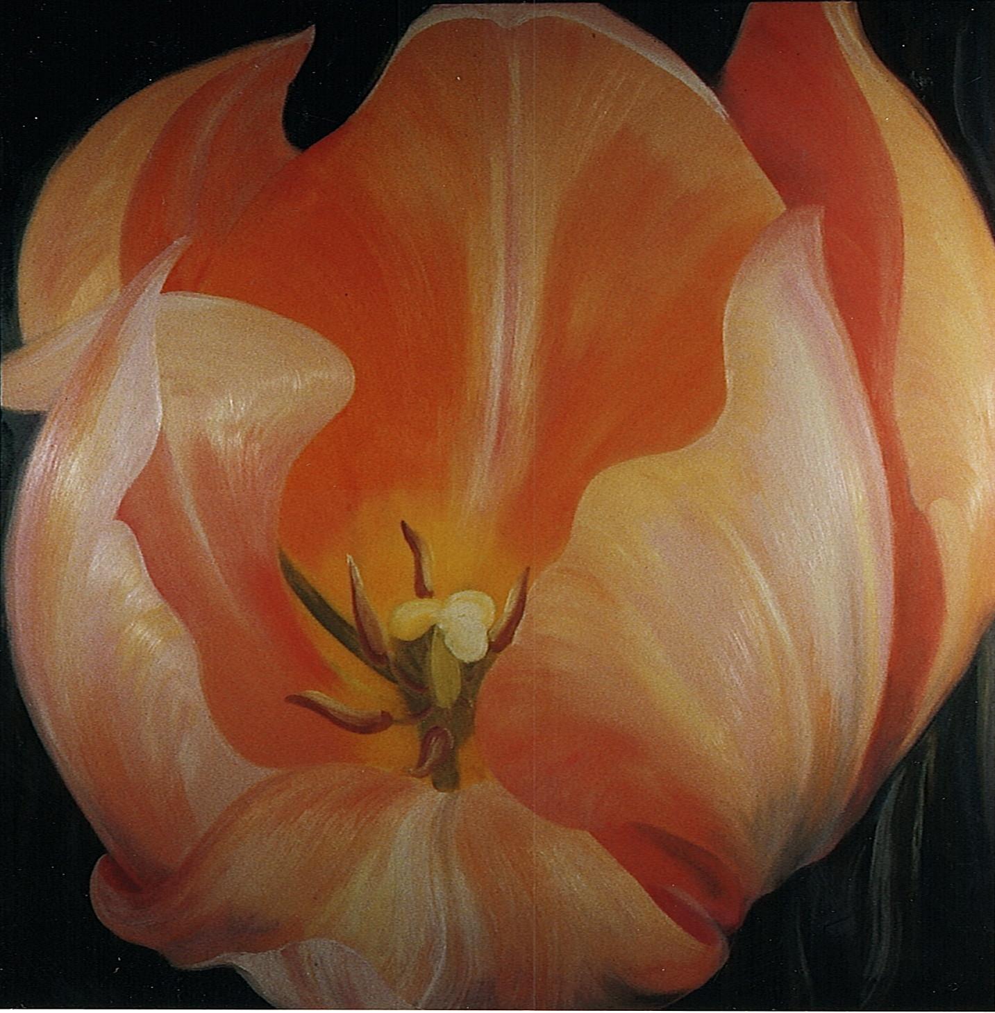 tulip_88