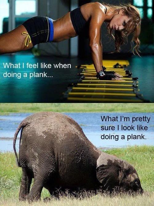 plank elephant