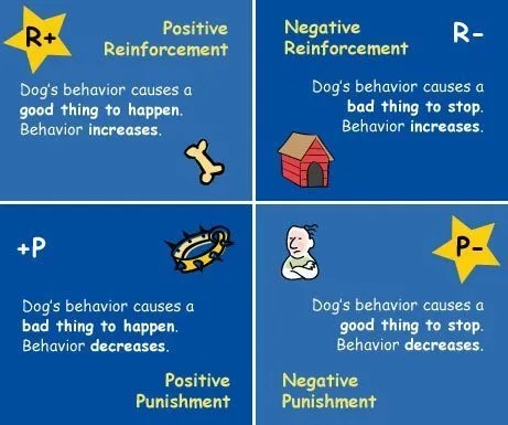 Fitness Through Operant Conditioning Earthfit