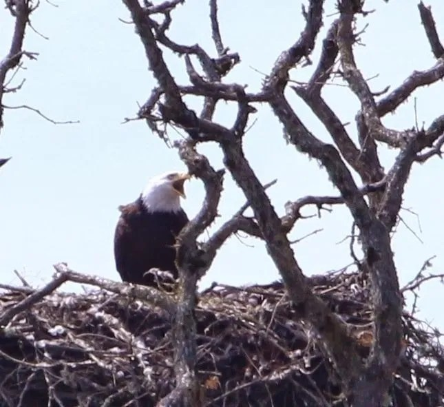 I guess cranky eagles deserve some privacy to raise their young
