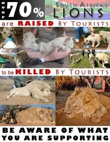 lions-poster-for-canned-hunting-13