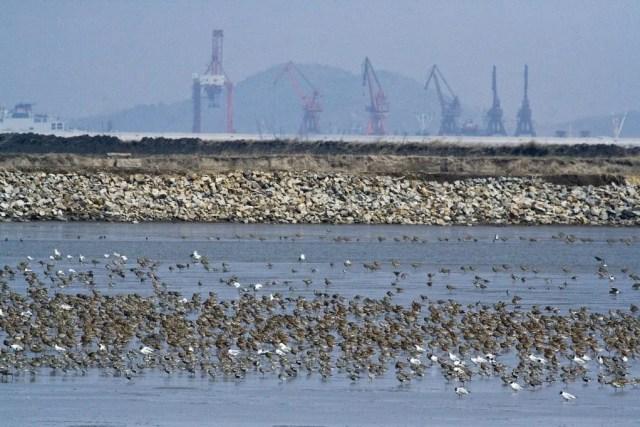 China, Yellow Sea Coast, April-May 2007