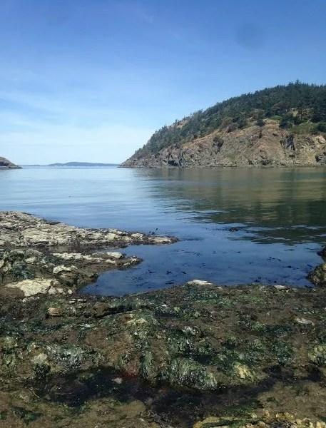 30 Days Wild- June 5: Beach Naturalist