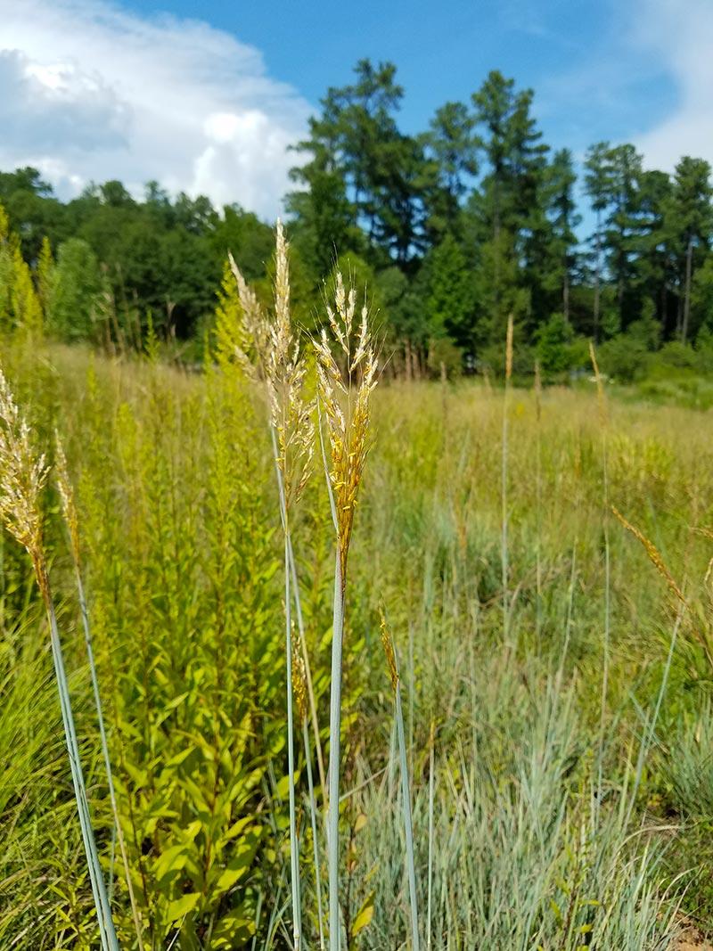Clemson University ICAR | Earth Design Landscape Architecture ...