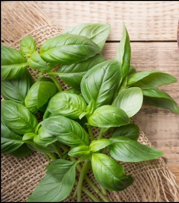 basil-leaves-and-garlic-in-wooden-bowl