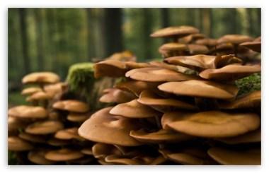 forest_mushrooms-t2