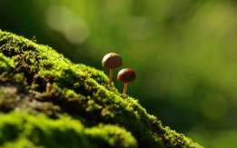mushroom-wallpaper-6