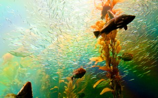 The Giant Kelp Exhibit is the first tank in the world to grow California Giant Kelp. It's apparently not an easy thing to do. (You need to continually pump in sea water, keep the water turbulent at all times, and have exposure to the open air.)
