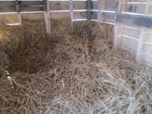 Cozy inside the goat hut