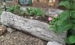 Created 5/2/13- One of the log planters Tim made with his trusty chainsaw