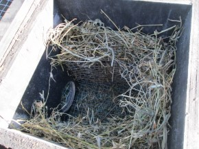 Here is a picture of the inside of the nest, co-zy!