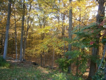Autumn in New England: A golden sun-spangled Forest