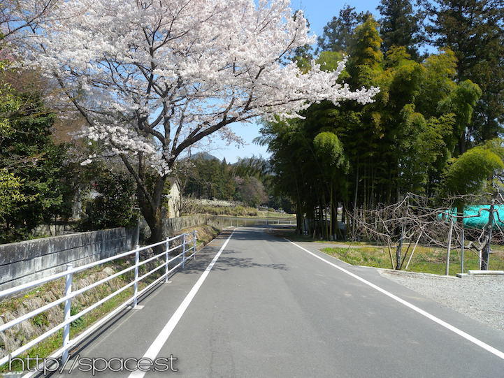 cherry trees on Nikko Kaido