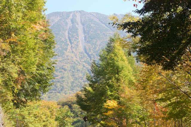 autumn leaves forecast 2015