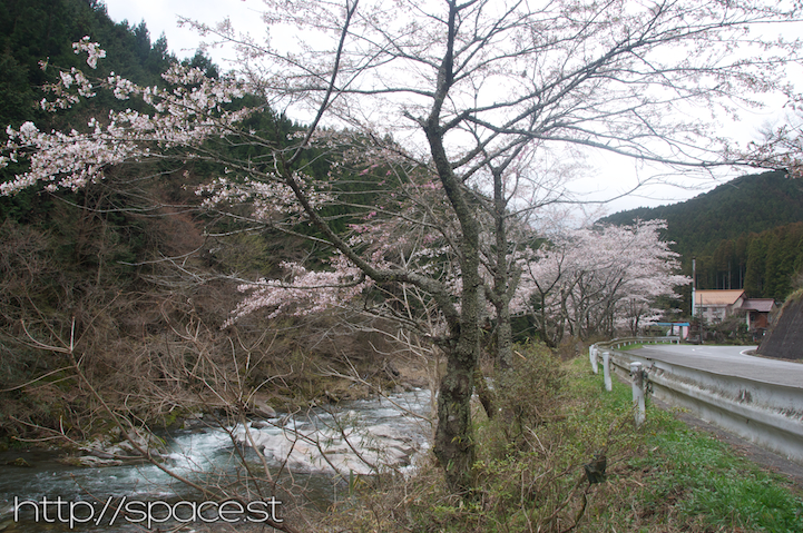 Black River, Cherry Blossoms & the hostel