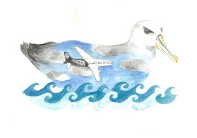 Ross the Albatross
