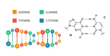 DNA Guanine