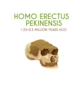 Homo Erectus Pekinesis