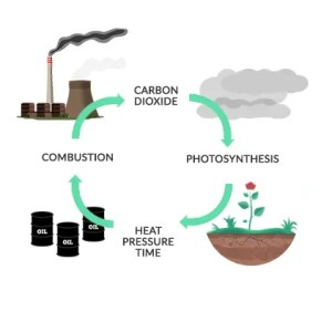 Long-Term Carbon Cycle