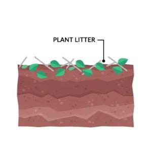 Plant Litter