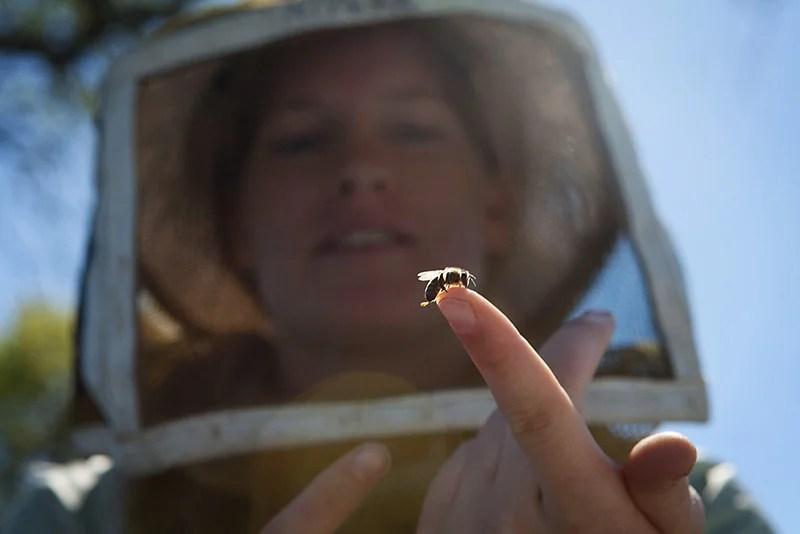 Alyssa Anderson, daughter of beekeeper Jeff Anderson, holds a baby bee.