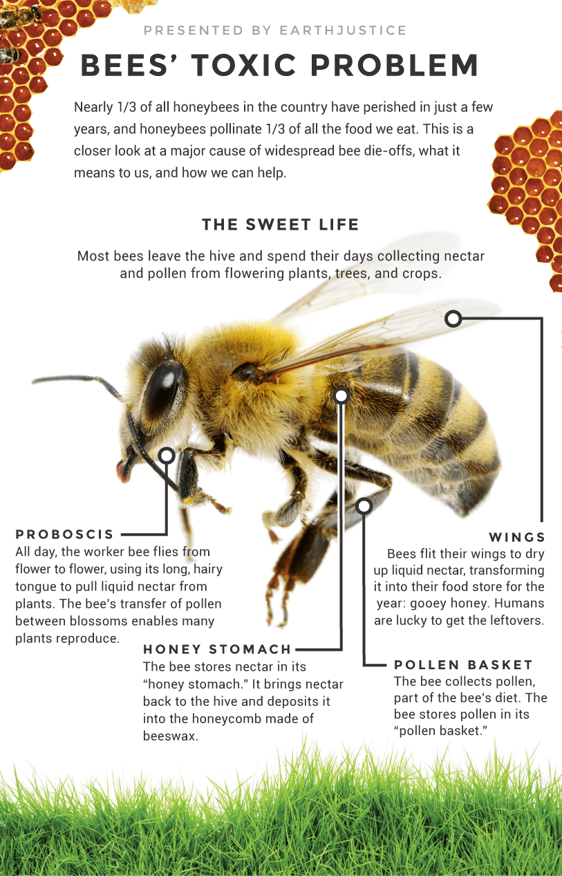 Nearly 1/3 of honey bees have perished in just a few years, and honeybees pollinate 1/3 of all the food we eat. This is a closer look at a major cause of widespread bee die-offs, what it means to us, how we can help.