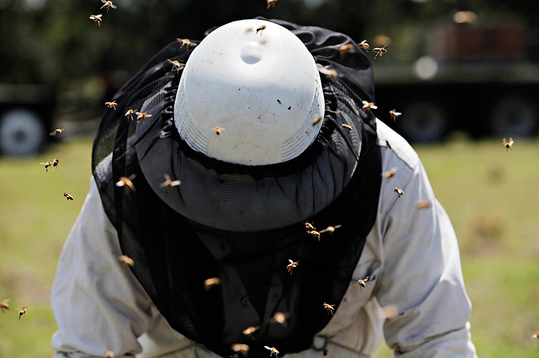 A beekeeper works in Umatilla, Florida.