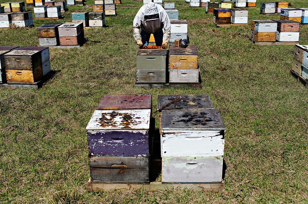 Bee boxes in Umatilla, Florida.
