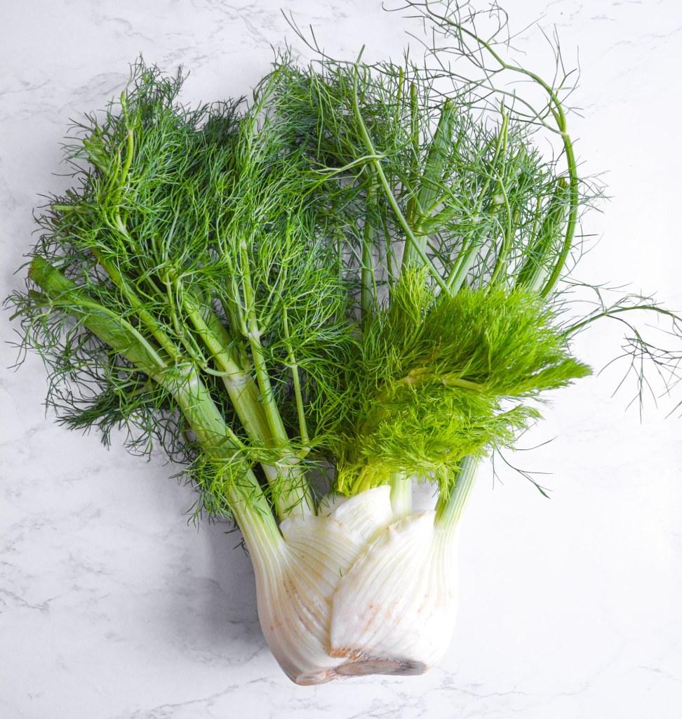 An untrimmed fennel bulb