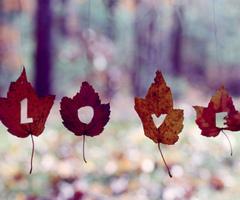 fall-hope-leaves-live-love-Favim.com-273596