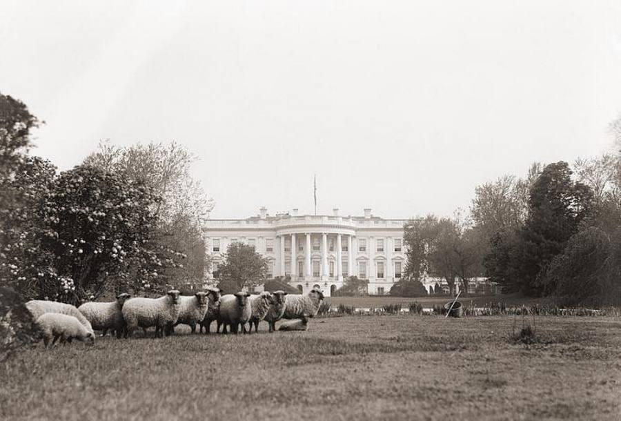 1918_white_house_lawn_mowers