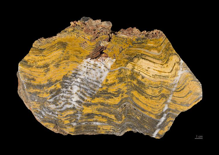 Paleoarchean stromatolite