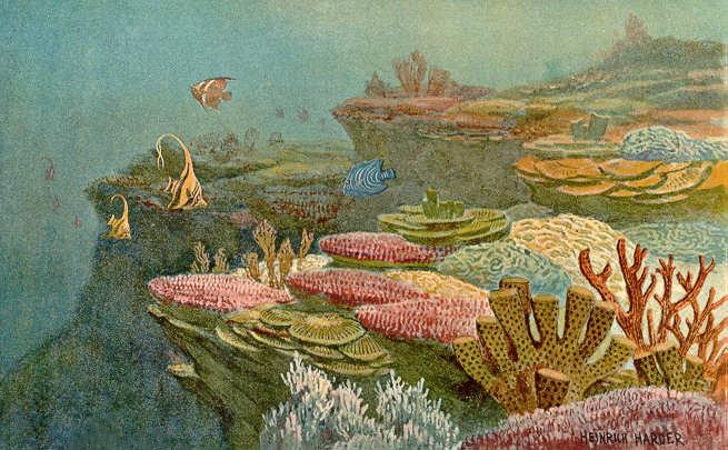 Devonian Coral Reefs
