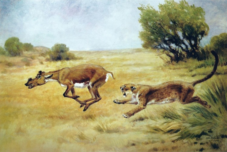 Dinictis Chasing a Protoceras