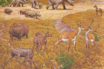 Pliocene