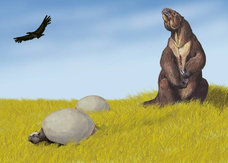 Ground Sloths and Glyptodonts