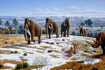 Quaternary fauna